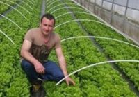 Ceapa verde de Bălești, preferata târgujienilor! În curând, și salata va ajunge pe piață
