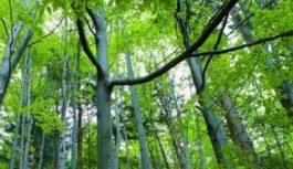 Peste 2.000 de hectare de pădure din Gorj, incluse în Catalogul Pădurilor Virgine și Cvasivirgine din România