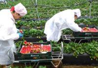100 de locuri de muncă în agricultură în Scoția și Marea Britanie. Selecția va avea loc la Târgu Jiu