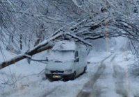 Copaci căzuți la Cloșani pe o mașină de marfă
